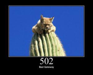 502 Bad Gateway status cat