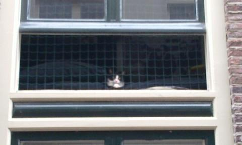 anti-cat netting in window