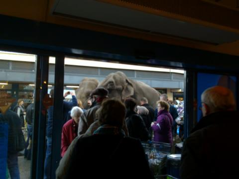 Elephants outside Albert Heijn, Keizerslanden, Dec 2011