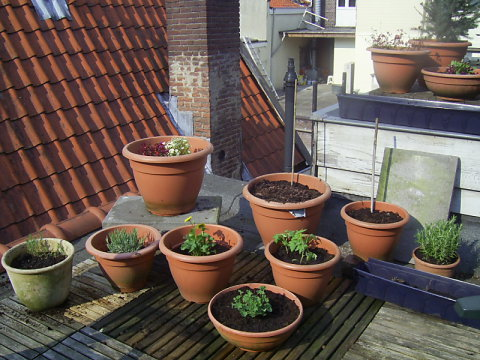 Corner of roof terrace with new plants
