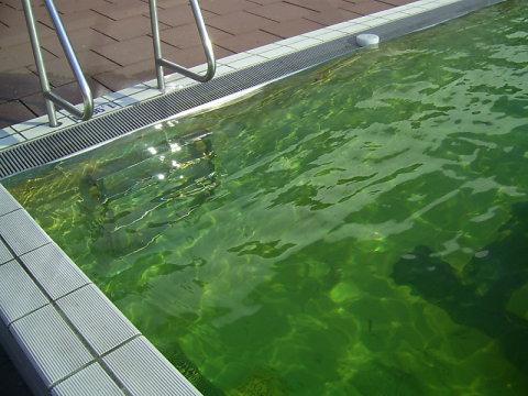 Green water in Borgelerbad
