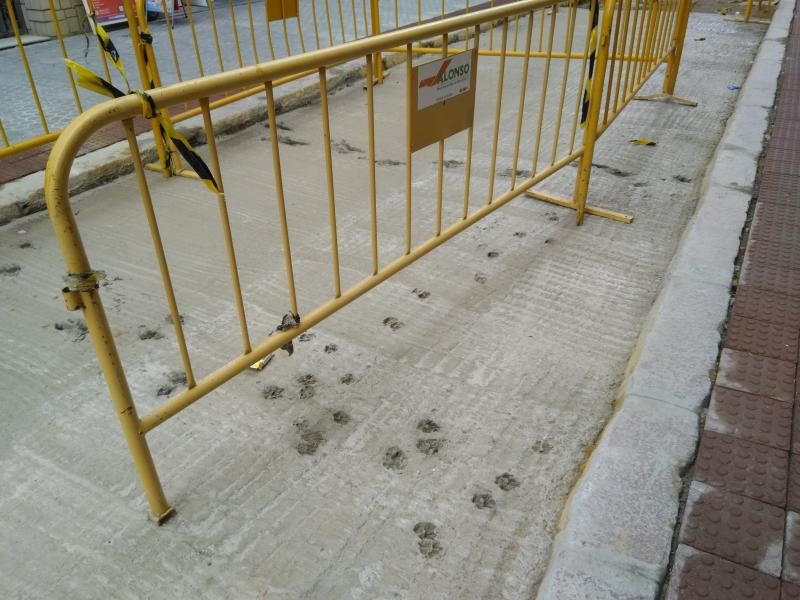 dog prints in Calle Amor de Dios