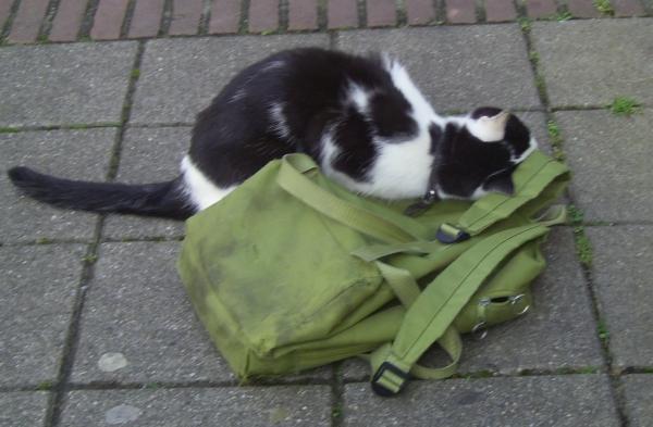 Cat cuddling a battered green backpack